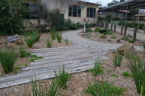Thanks to dedicated parents this recently reclaimed corner of BSPS our school includes sections of beautifully landscaped treasures for kids to explore, relax and let their imaginations flourish.